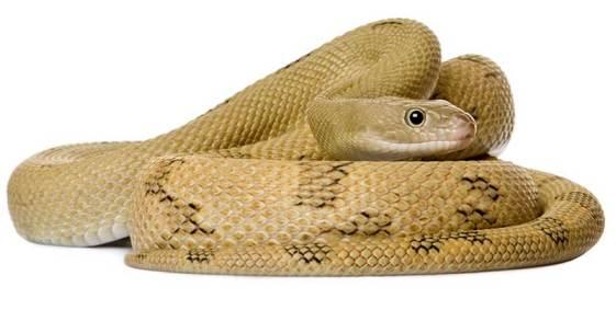 serpiente5.jpg